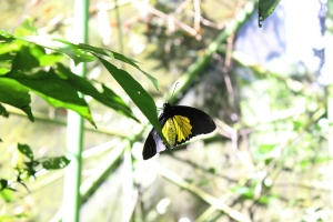 Wanna see more butterflies in Bantimurung? Do save them.... stop buying them as a souvenir!