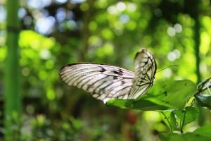 Ini salah satu koleksi kupu-kupu di penangkaran